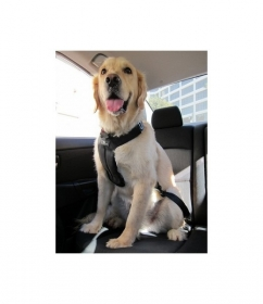 Dog it Dog safety harness  in car 0